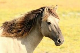Wat komt er allemaal kijken bij paardrijden?