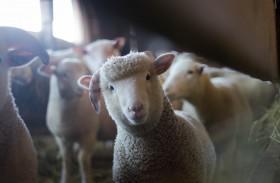 De voorvechters van dierenrechten in Nederland