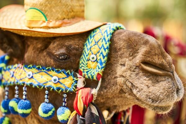 Familiereis Zuid-Afrika op maat ofwel een samengestelde reis door jou en mensen die zelf ook met kinderen reizen
